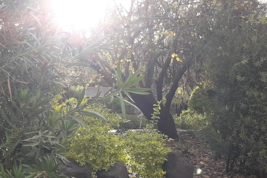 נוף כפר הנופש נופי גונן